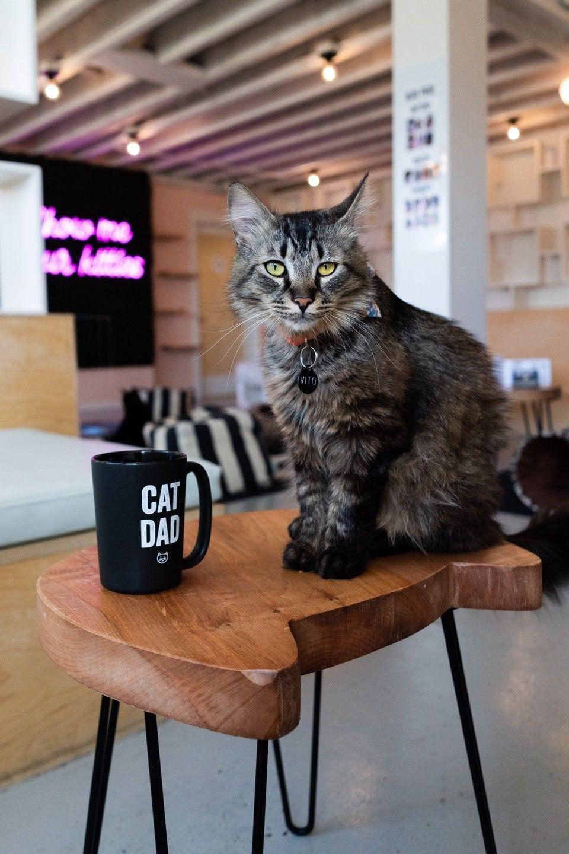 neko-cat-cute